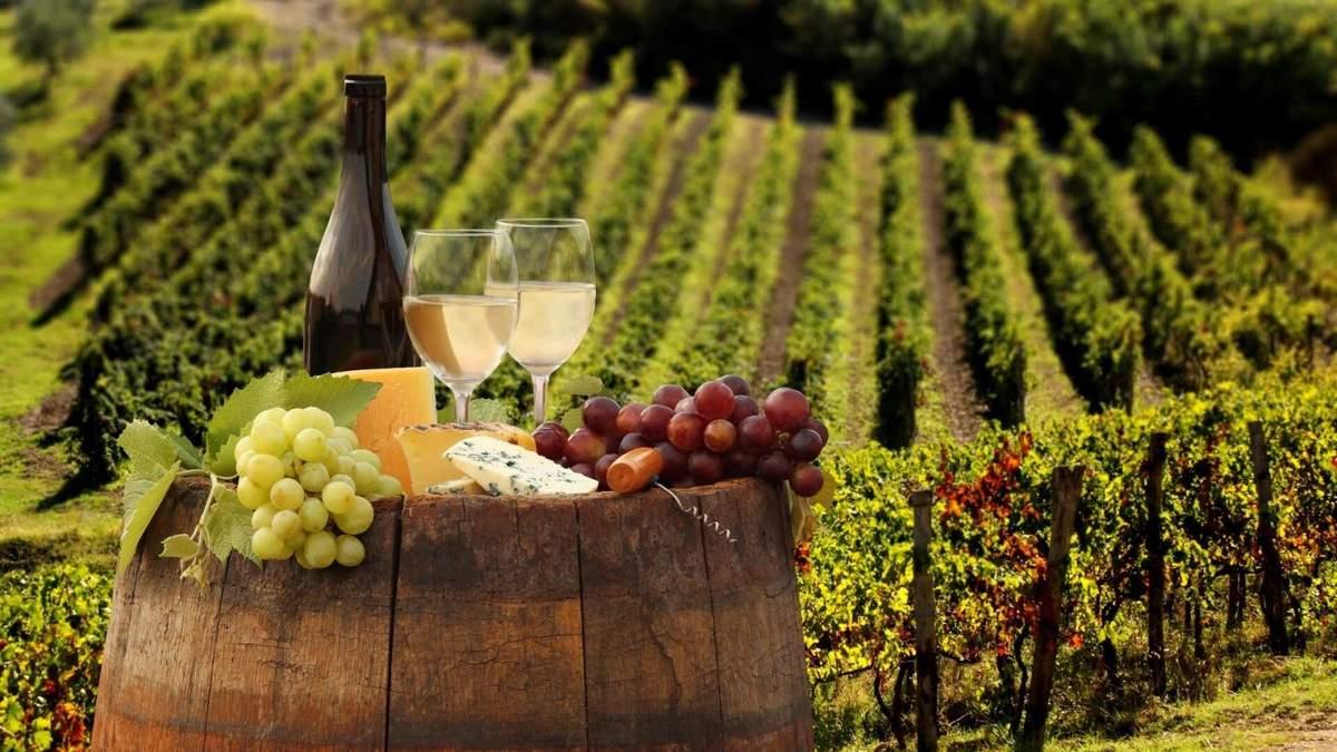 Як виробляють вино: технологія і основні етапи