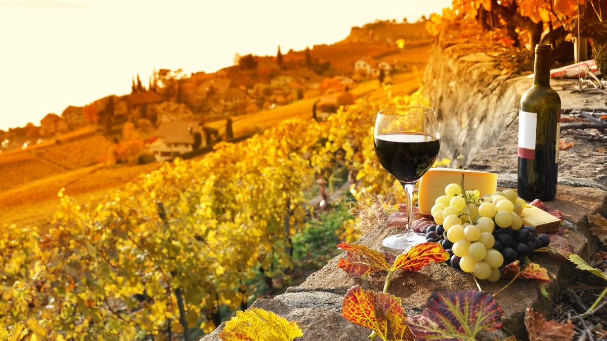 Вибрати вино: на що звернути увагу у магазині