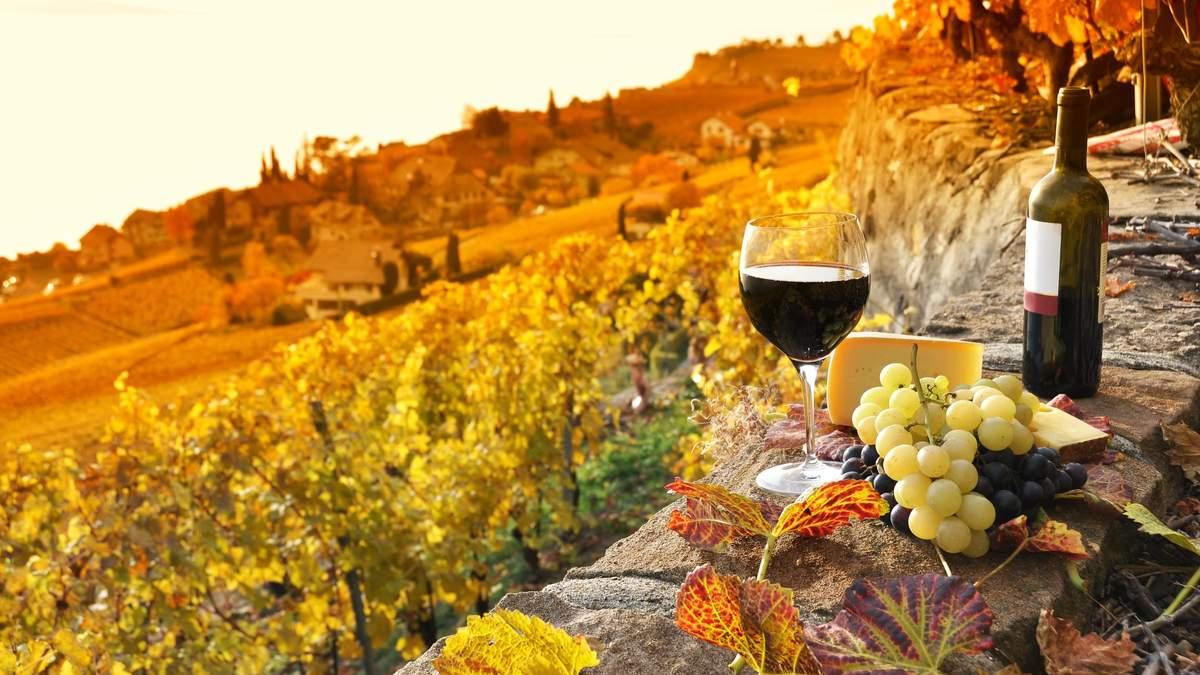 Выбрать вино: на что обратить внимание в магазине