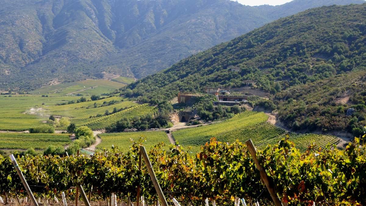 Виноробство у Чилі