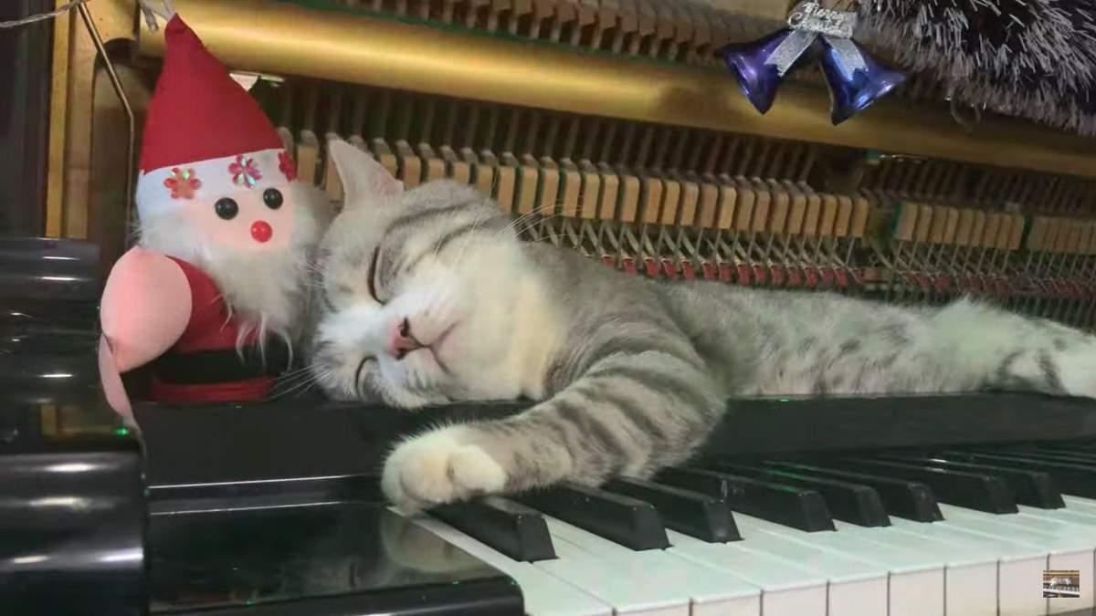 Котик спить всередині фортепіано, поки його власник грає різдвяні мелодії: милі фото та відео