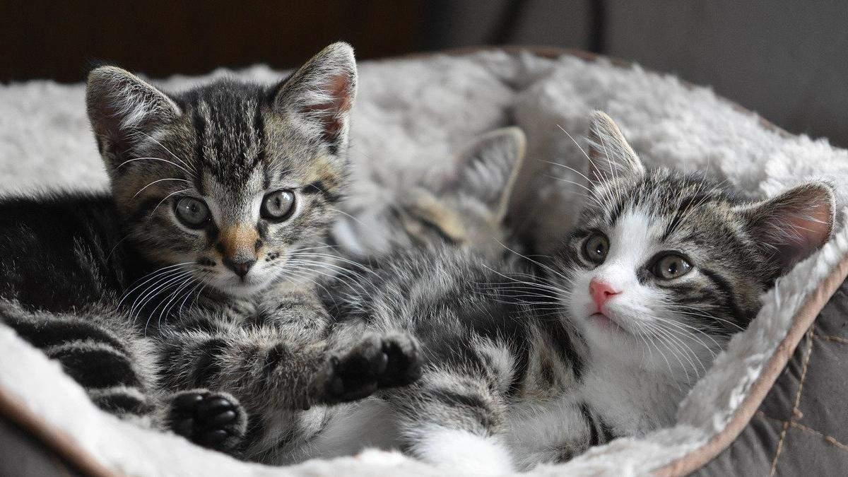 Забудьте про це: 5 поширених міфів про котиків, у які ми досі віримо