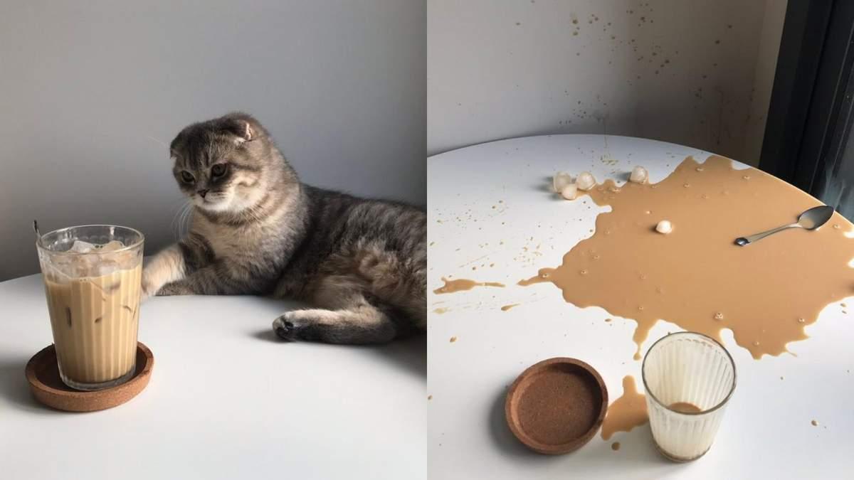20 кумедних та зворушливих фото котів, після яких вам точно захочеться завести пухнастика
