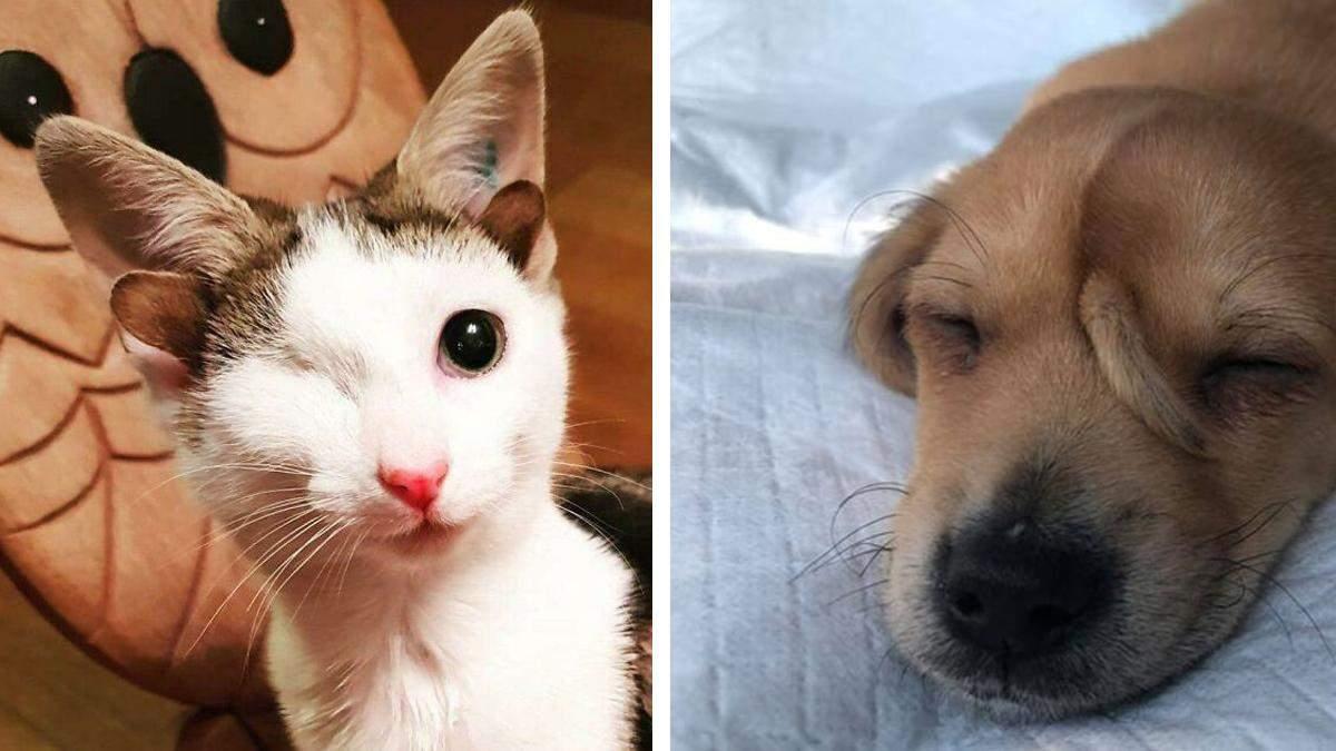 15 котиков и песиков с невероятными мутациями, которых хочется обнять: фото