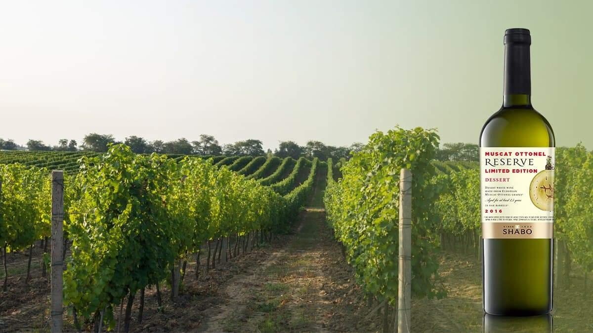 Визитная карточка: десертное белое вино SHABO Reserve Мускат Оттонель