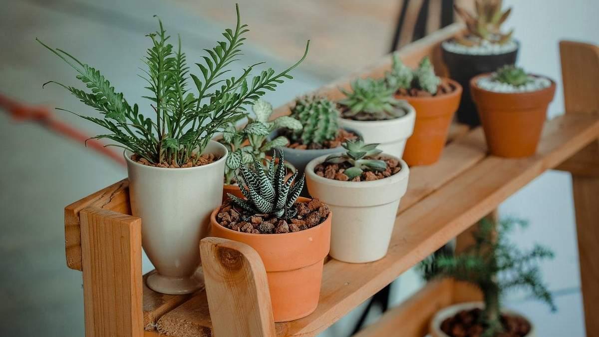 5 оригинальных комнатных растений