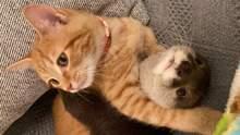 Зворушлива дружба видри та кошеняти: користувачі у захваті від милих фото та відео