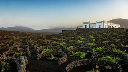 Як працюють виноробні на схилах вулканів – вражаючі фото й подробиці