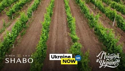 До Дня винороба та виноградаря створили лімітовану колекцію вина