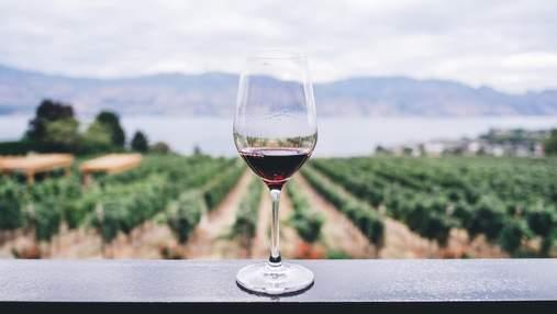 """Чому вино може """"задихатися"""": цікаві факти, про які ви не знали"""