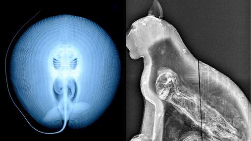 От египетского саркофага до Свинки Пепы: подборка самых странных рентгеновских снимков