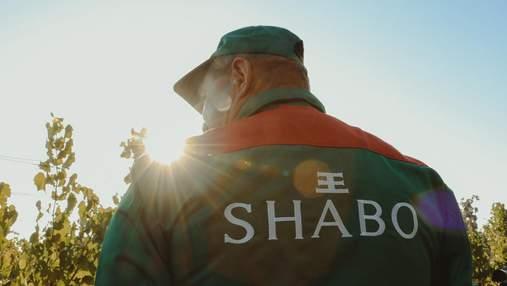 В SHABO стартовал сбор нового урожая винограда: как все происходит
