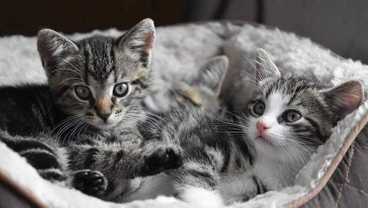 Забудьте за це: 5 поширених міфів про котиків, у які ми досі віримо